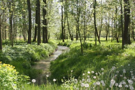 kulturpark-neubrandenburg-bach