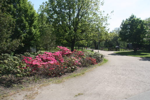kulturpark-neubrandenburg-blumen